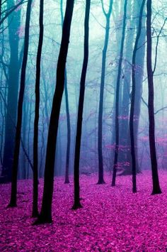 blog nature 3